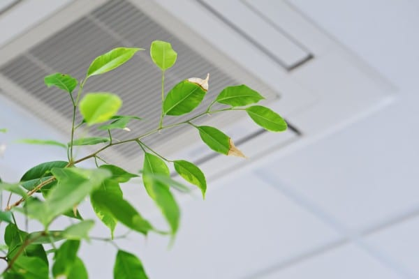 green leaves in commercial space