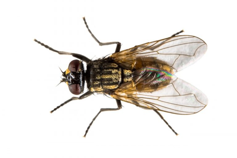 Pest control image of a wasp